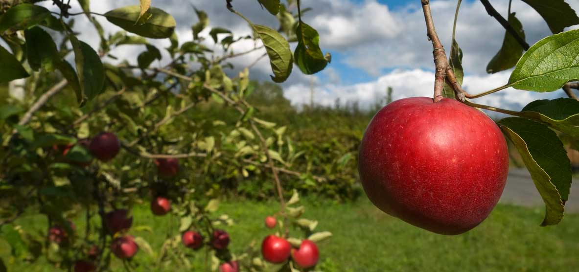 Learn About Cloud Software From A Story About Apples